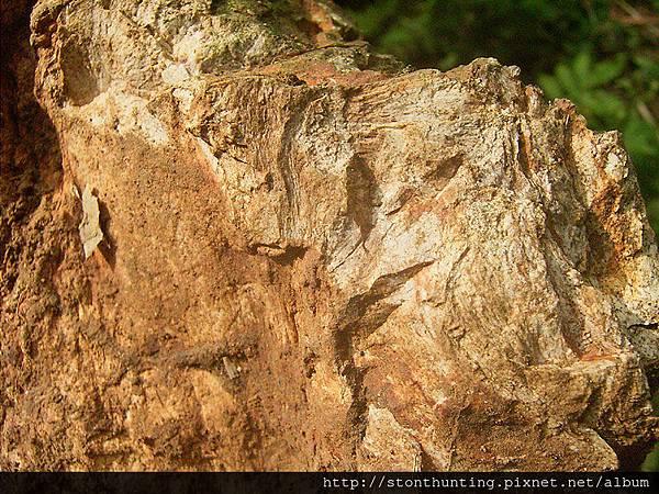 木化採集G24097.jpg