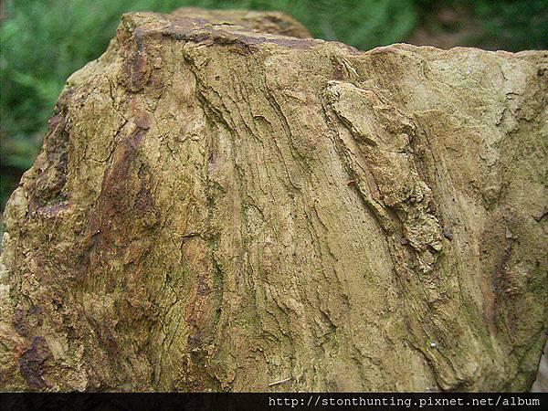 木化採集G24112.jpg