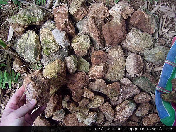 木化採集G24136.jpg