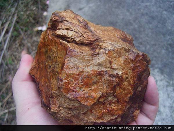 木化採集G24145.jpg