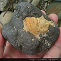 三峽河G25017_文石.jpg