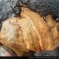 三峽河G25020_文石.jpg