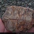 三峽河G25088_木化石.jpg