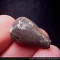 大漢溪螺化石G25832.jpg