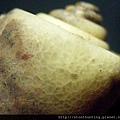 大漢溪螺化石G25841-2.jpg