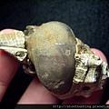 大漢溪螺化石G25857.jpg