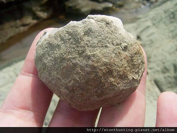 採集G28174_海膽化石.jpg
