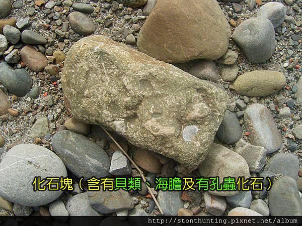 採集G28197_化石塊.jpg