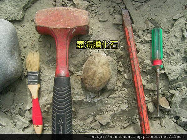 採集G28204_壺海膽化石.jpg