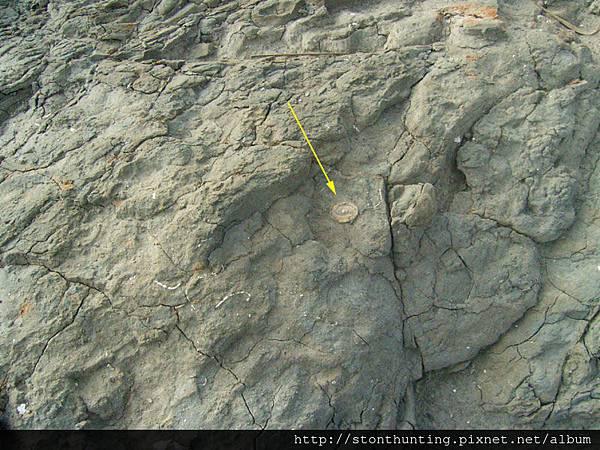化石採集G28214.jpg