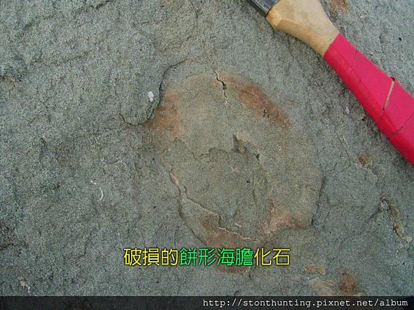 化石採集G28224.jpg