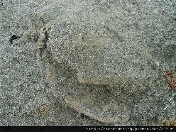 化石採集G28228.jpg