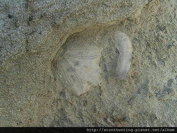 化石採集G28230.jpg
