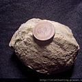 壺海膽化石G28248.jpg