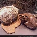 礦物寶石教育展(2016)_G30836.jpg