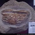 礦物寶石教育展2016_G30891.jpg