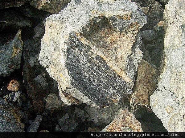 14龜山碳木化G13957.jpg