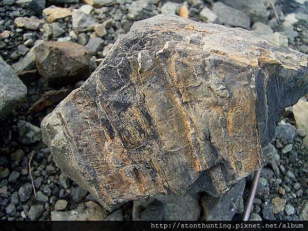17龜山碳木化G14014.jpg