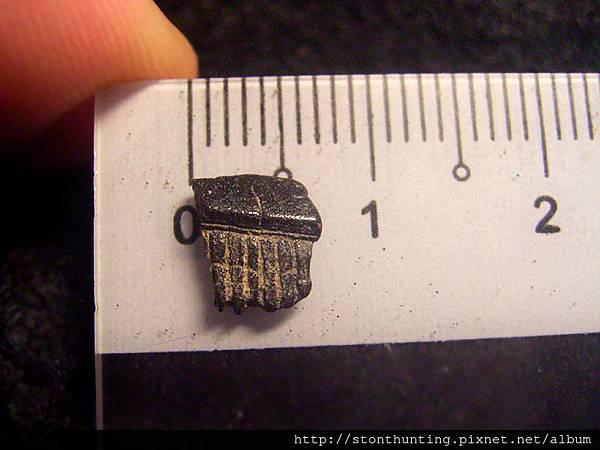 03大漢溪_魟魚牙化石G31338.jpg