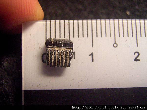04大漢溪_魟魚牙化石G31339.jpg