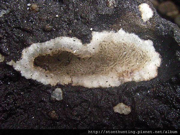 樹林-火山礦物G30671-1.jpg