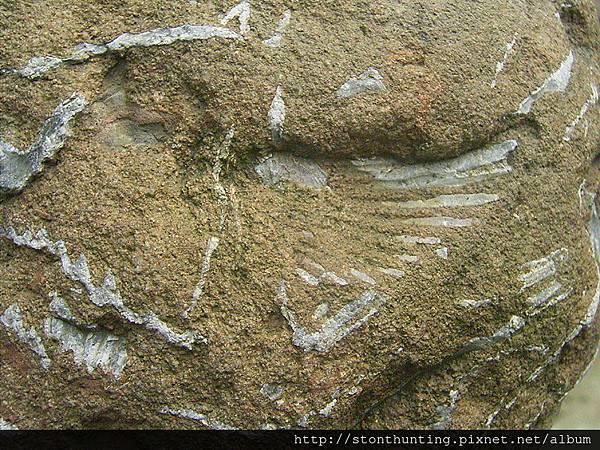 三峽-扇貝化石G31066.jpg