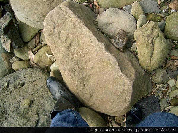 三峽-管蟲化石G31072.jpg