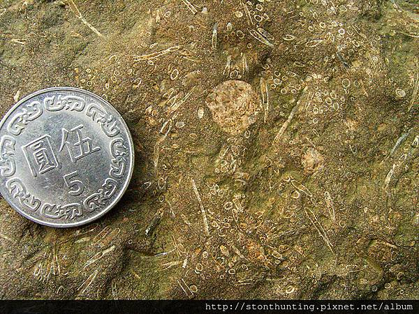 三峽-管蟲化石G31075.jpg
