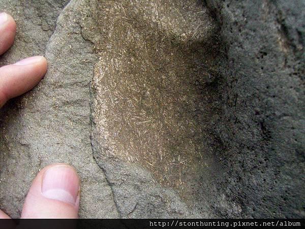 三峽-管蟲化石G31104.jpg