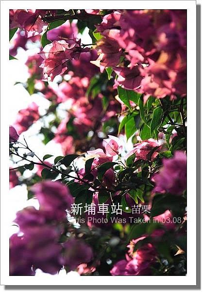 IMG_9124.JPG~1.jpg