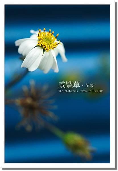 IMG_9195.JPG~1.jpg