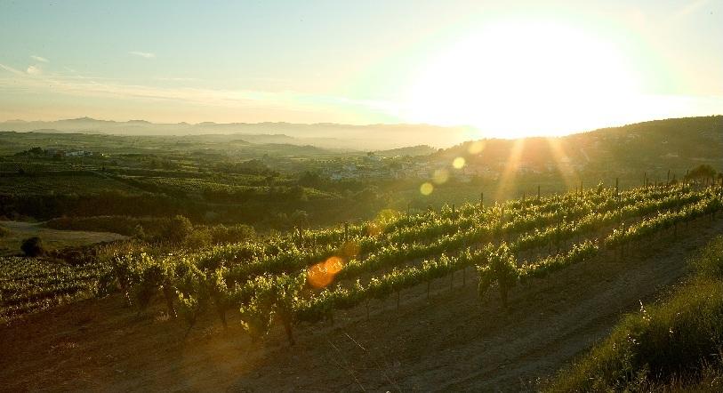 Pedenes vinyard.jpg