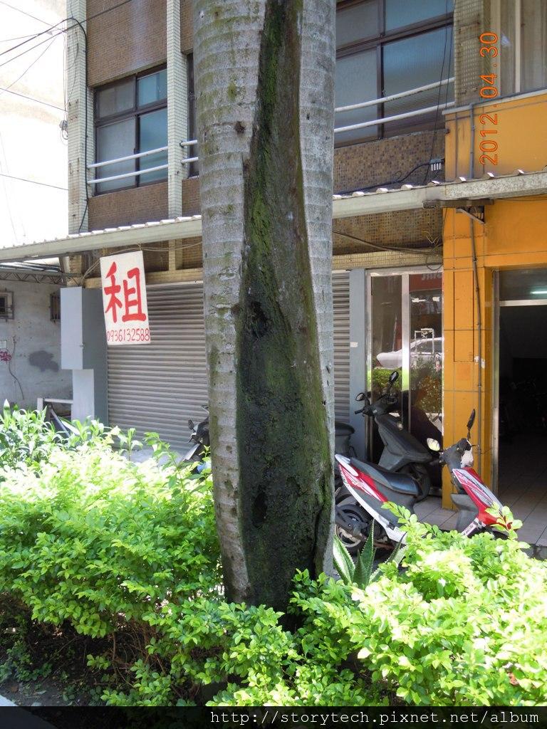 明志樹洞 (2)