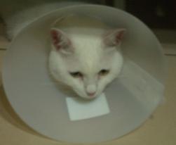 頭套讓貓很鬱卒