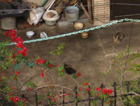後陽台對面屋頂上的貓