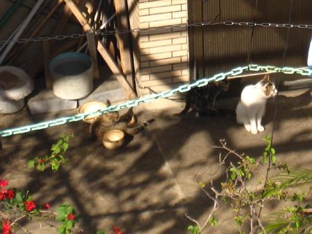 後陽台對面屋頂的貓