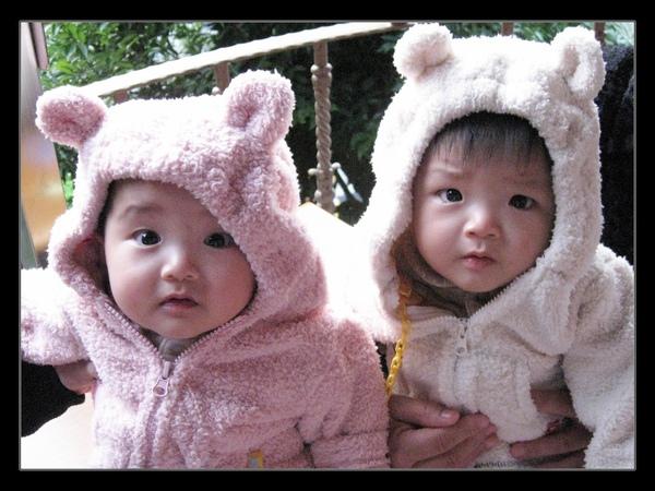 twins熊.jpg