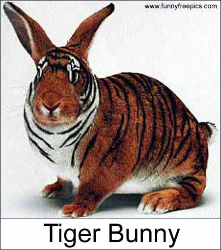 tiger_bunny.jpg