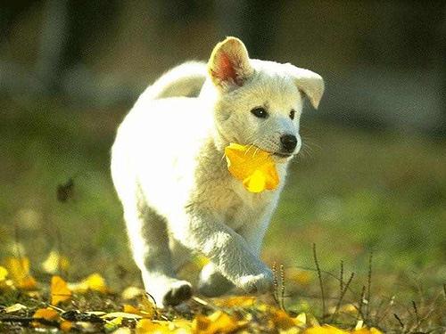cute dog.bmp