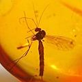 遭封印5000萬年「蚊子」首次曝光!