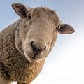 【心理測驗】憑直覺選三隻動物,找出你的人際盲點