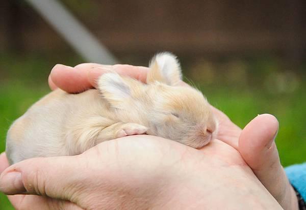 bunny (6 of 6)