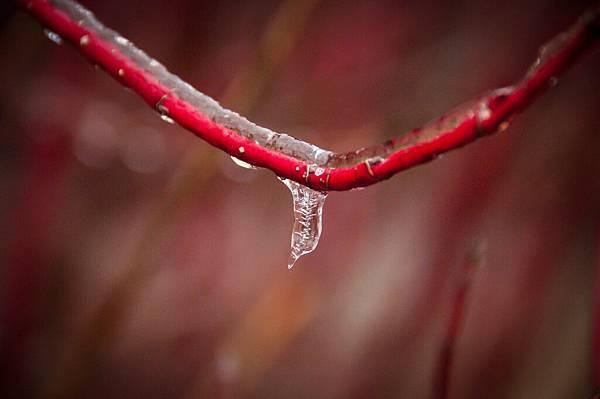 freezing rain-7.jpg