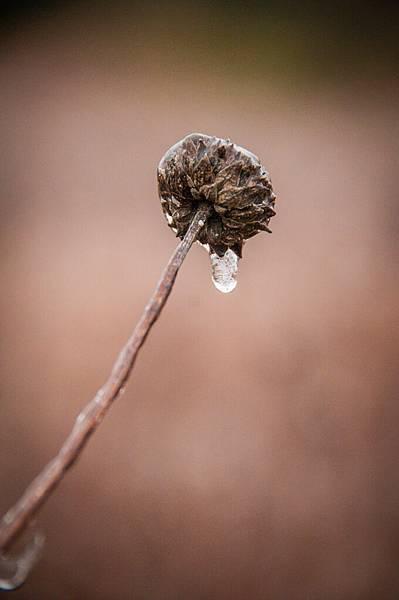 freezing rain-21.jpg