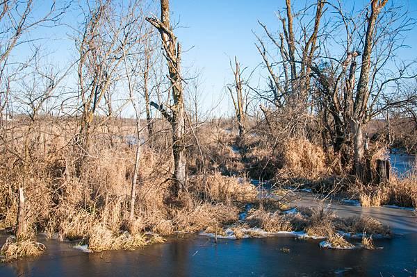 wetlands-2.jpg