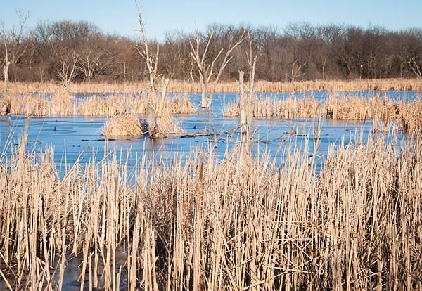 wetlands-4.jpg