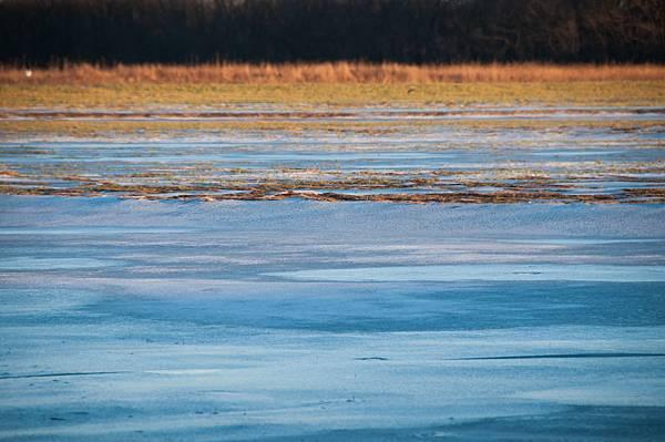 wetlands-21.jpg