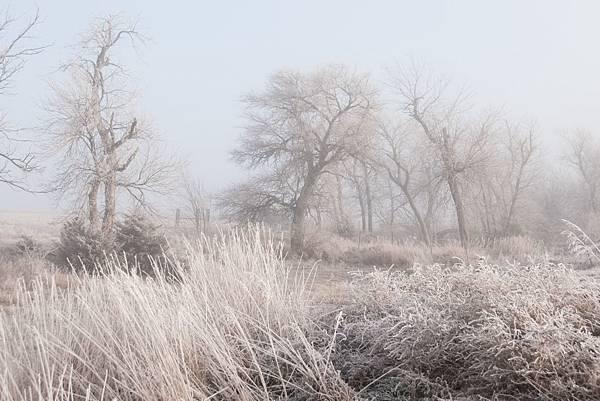 fog-16