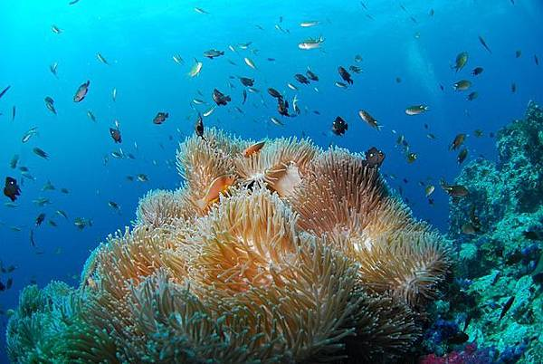 diving-689826_640.jpg