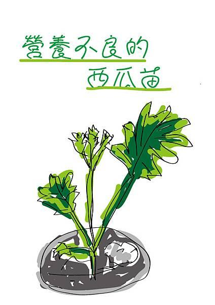 營養不良的西瓜